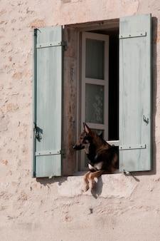 Perro colgando de una ventana