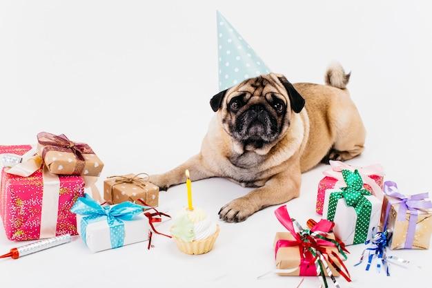 Perro de cumpleaños con regalos.