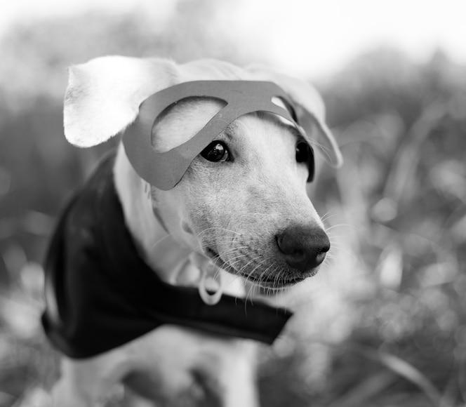 Perro disfraz raza canino amigo mamífero animal