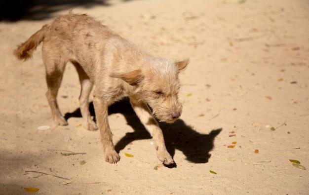 Perro doméstico callejero caminando sobre arena con flaco