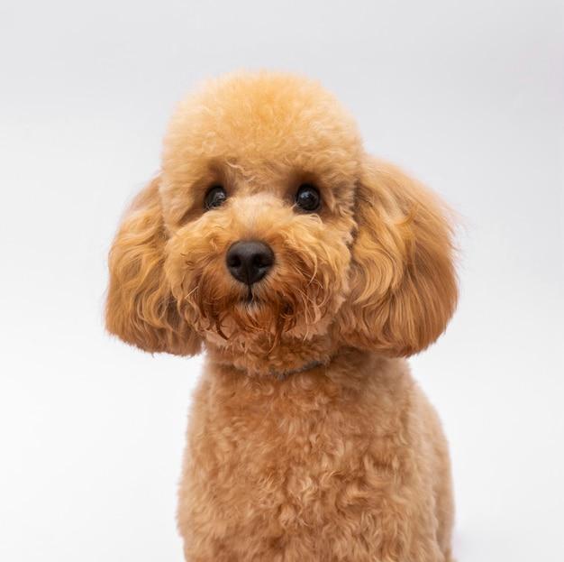 Perro doméstico vista frontal