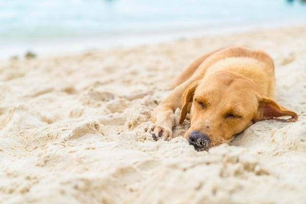 Perro duerme en la playa
