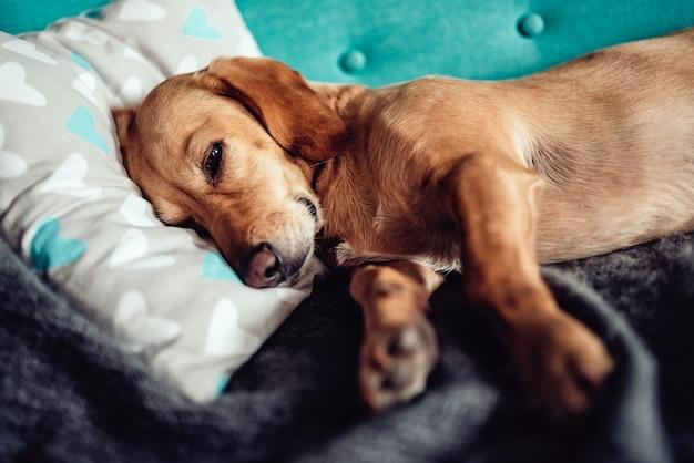 Perro durmiendo en el sofá