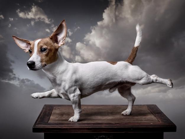 Un perro estira sus patas delanteras derecha y trasera izquierda.