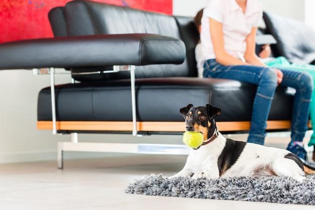Perro de la familia jugando con la pelota en la sala de estar