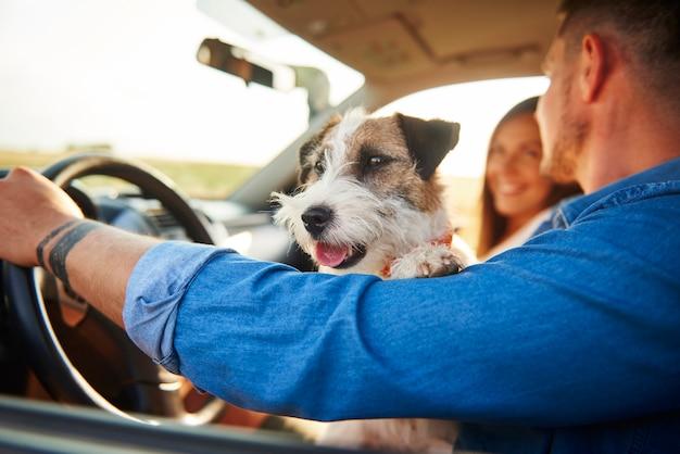 Perro feliz en coche durante el viaje por carretera