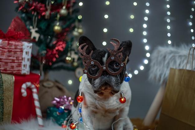Perro con gafas con astas de reno y luces alrededor del cuerpo entre regalos y árbol de navidad.