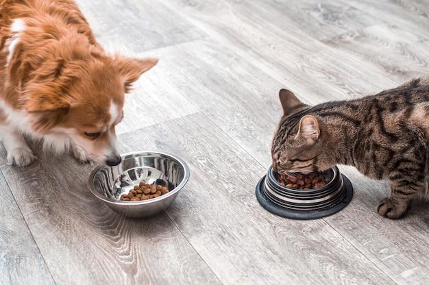 Perro y gato comen juntos alimentos secos de tazones en la cocina