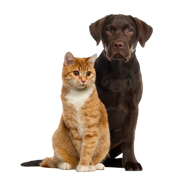 Perro y gato sentado aislado en blanco