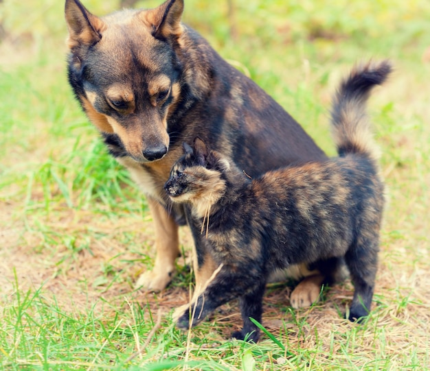 El perro y el gato son mejores amigos, jugando juntos al aire libre