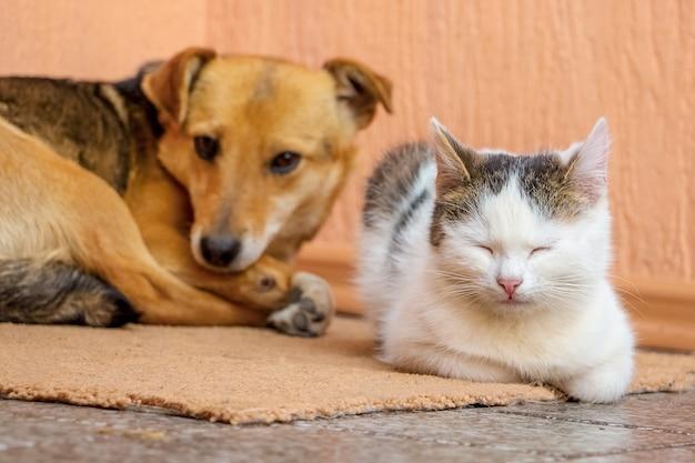 El perro y el gato yacen juntos en la alfombra.