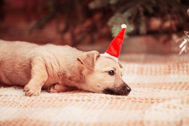 Perro gracioso en el árbol de navidad de fondo