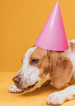 Perro gracioso cansado con sombrero de fiesta