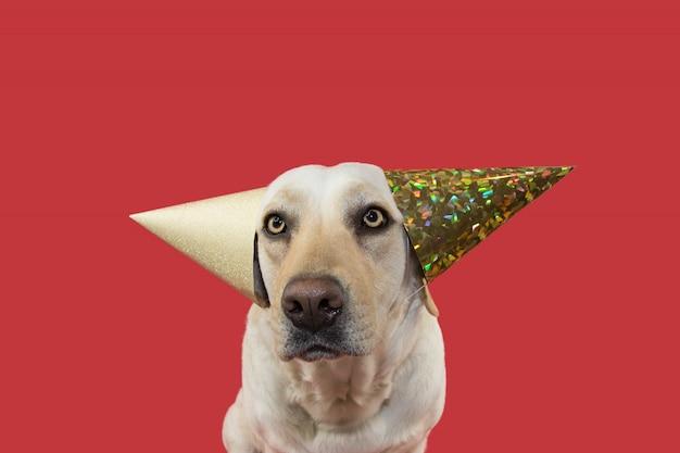 Perro gracioso celebrando un cumpleaños con dos sombreros dorados