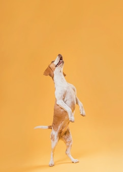 Perro gracioso parado sobre las patas traseras