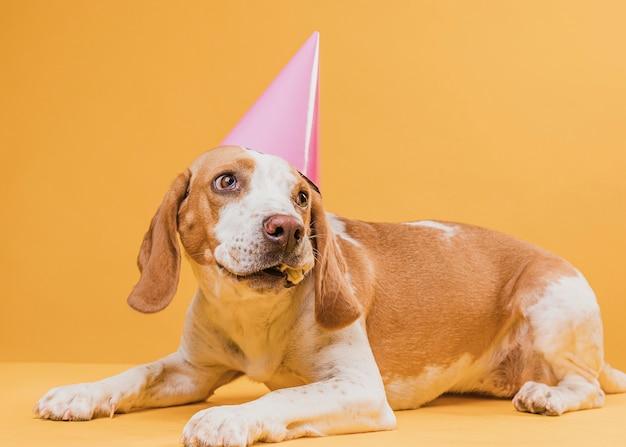 Perro gracioso con sombrero de fiesta mirando a otro lado