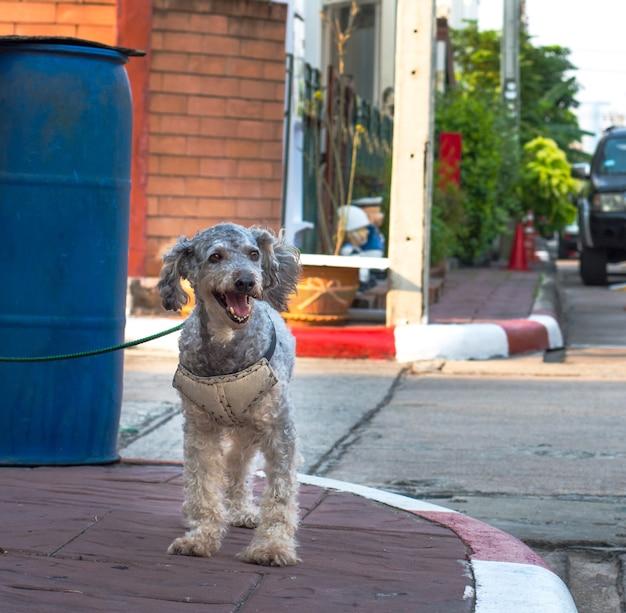 Perro guardia en el frente de la casa.