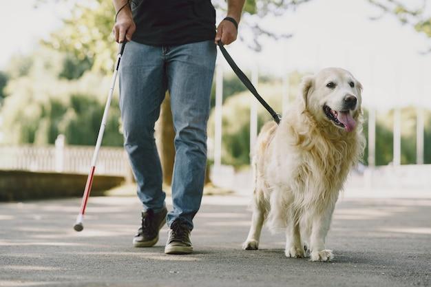 Perro guía ayudando a ciego en la ciudad. chico ciego guapo tiene descanso con golden retriever en la ciudad.