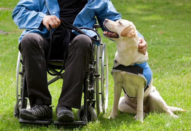 Perro guía labrador y su dueño discapacitado.