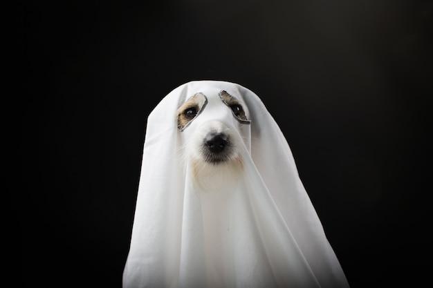 Perro halloween fantasma de pieza