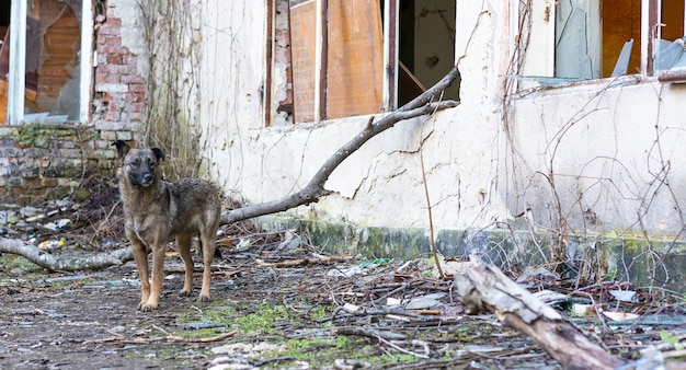 Perro sin hogar cerca de un edificio abandonado
