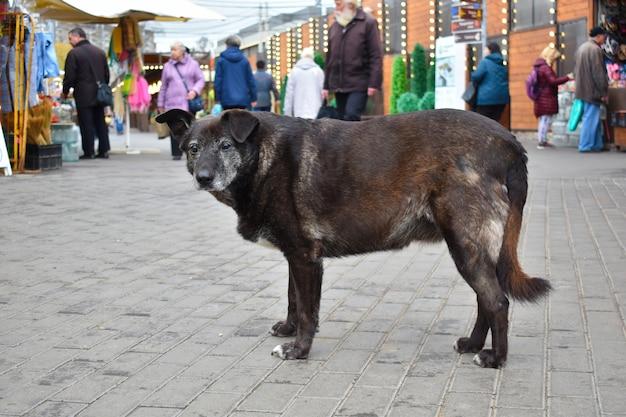 Perro sin hogar en el mercado de la ciudad.