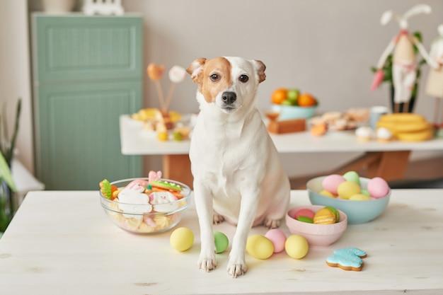 Perro jack russell terrier en pascua sentado en la mesa en la cocina con huevos y pan de jengibre