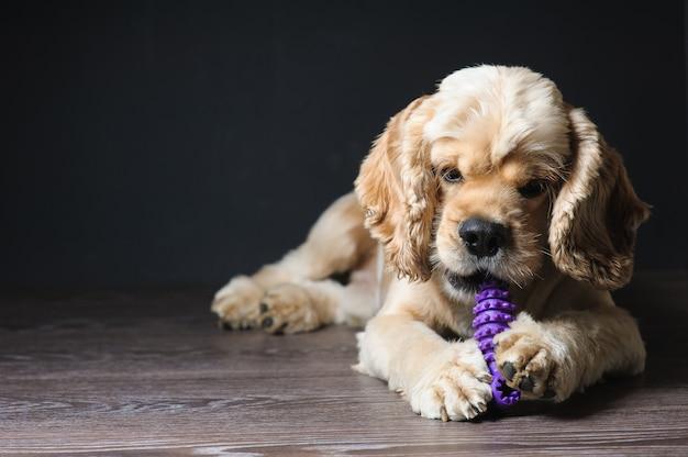 Perro jugando con un juguete.