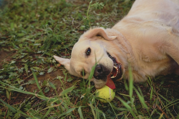 Perro jugando con una pelota en la hierba