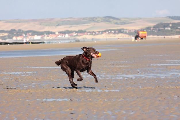 Perro jugando a la pelota en la playa en verano