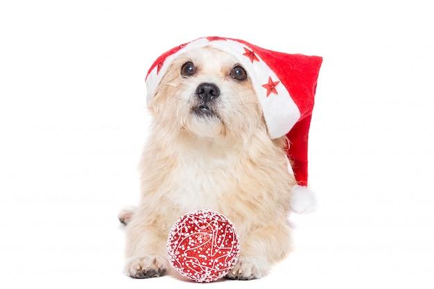Perro con un juguete de arbol de navidad.