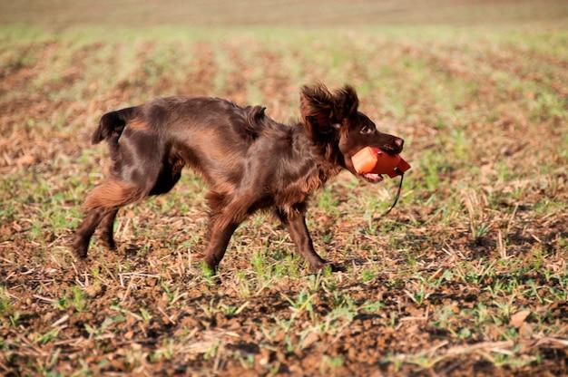 Un perro con un juguete masticable