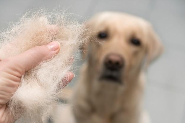 Perro de lana de cerca.