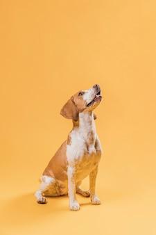 Perro lindo feliz mirando hacia arriba