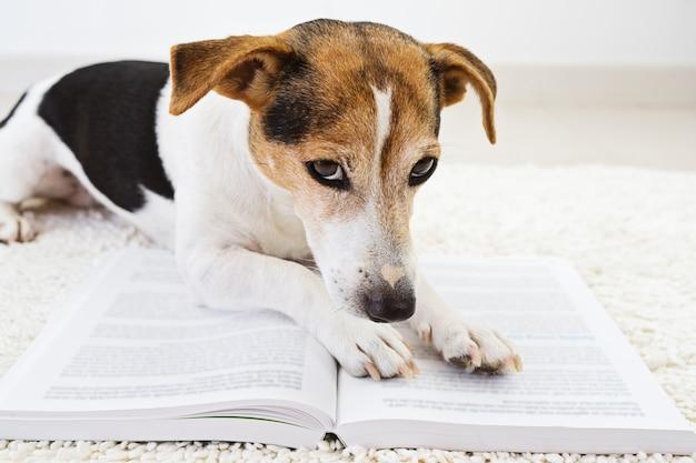 Perro lindo inteligente acostado con un libro abierto y mirando páginas