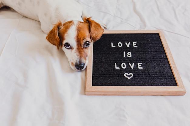 Perro lindo jack russell que miente en cama en casa. tablero de cartas además con el mensaje amor es amor. celebra el mes del orgullo y el concepto de paz mundial