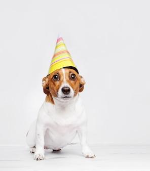 Perro lindo en sombrero del partido del carnaval que celebra cumpleaños.