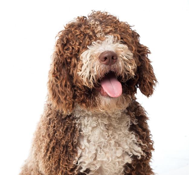 Perro marrón de cerca con la lengua fuera