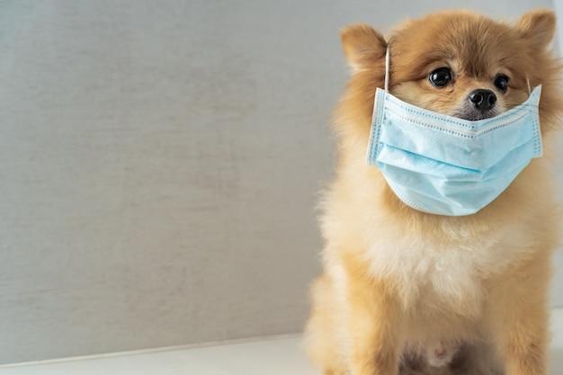 Perro con máscara de contaminación del aire para proteger el polvo pm2.