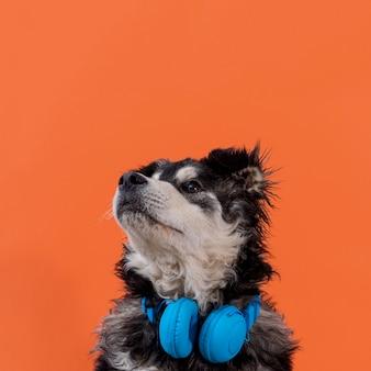 Perro mirando hacia arriba con auriculares en el cuello