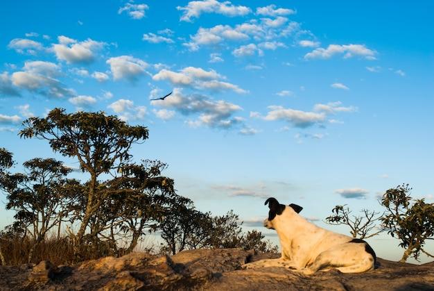 Perro mirando pájaro en el cielo en brasil