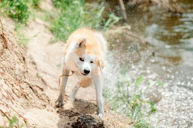 Perro mojado salió del agua