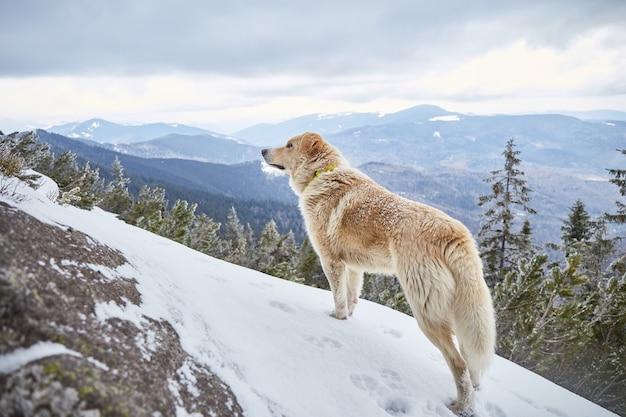 Perro en las montañas de invierno
