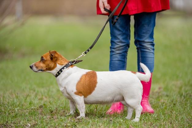 El perro y la muchacha de jack russell en botas rojas que caminan en primavera parquean.