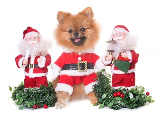 Perro y navidad