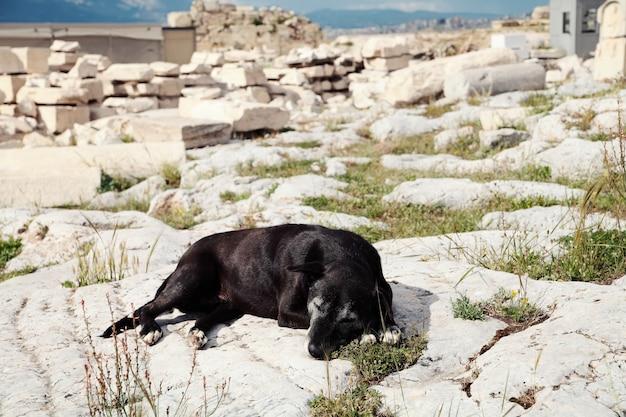 Perro negro durmiendo en la acrópolis. atenas, grecia.