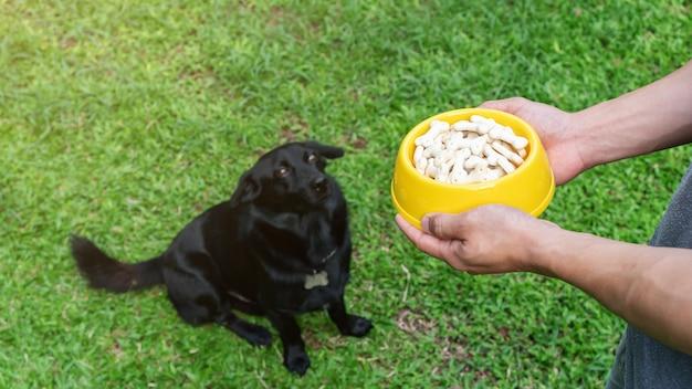 Perro negro lindo que espera alimentando de hombre.