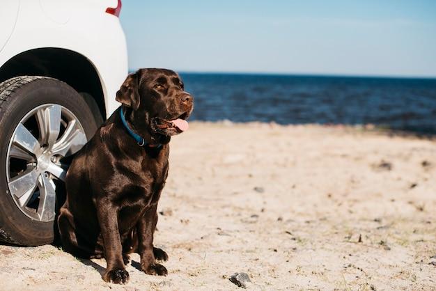 Perro negro pasándoselo bien en la playa