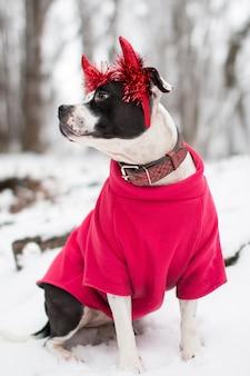 Perro en un paseo en invierno