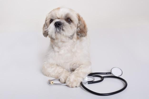Perro pequinés con estetoscopio aislado
